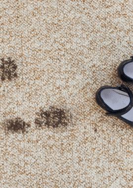 Teppichreinigung für Kindergärten